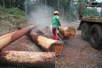 Bäume schonend & schnell entrinden
